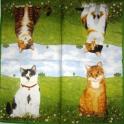 Четыре кошки