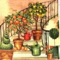 Лестница чудесница