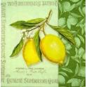 ветка лимона на салатовом