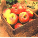 яблоки в ящике. FASANA