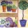 инжир, посуда и цветы