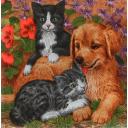Котята с щенком