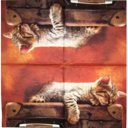 Кот на чемодане