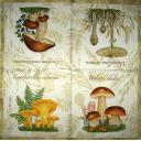 Четыре гриба