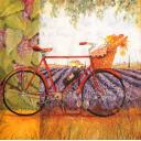 Велосипед в Провансе
