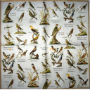 Каталог птиц