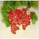 Красная смородинка