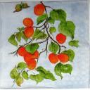 Оранжевые абрикосы