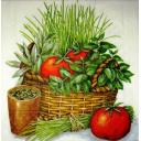 Помидоры и пряные травы