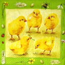 цыплята и пчелка