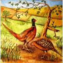 два фазана