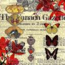 Винтаж коллаж с бабочками...