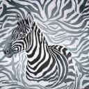 Зебра на узоре