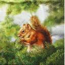 Белочка на елке