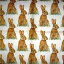много заек