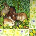 Зайчата весной