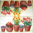 горшки с весенними цветами