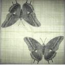 Бабочка на холсте