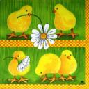 цыплята и ромашки