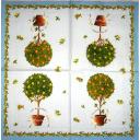 цитрусовые деревца