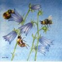 Пчелки. Раритет.