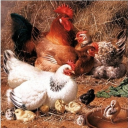 птичий двор