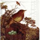 Птичка и гнездо