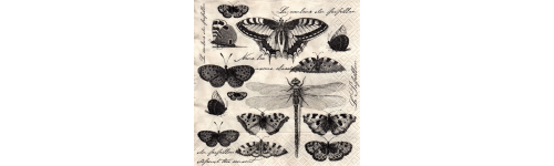 БАБОЧКИ, ПЧЁЛКИ и другие насекомые.
